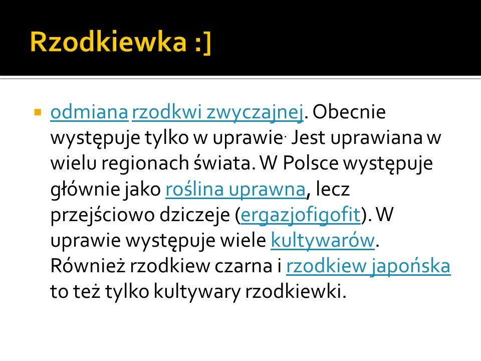 Rzodkiewka :]